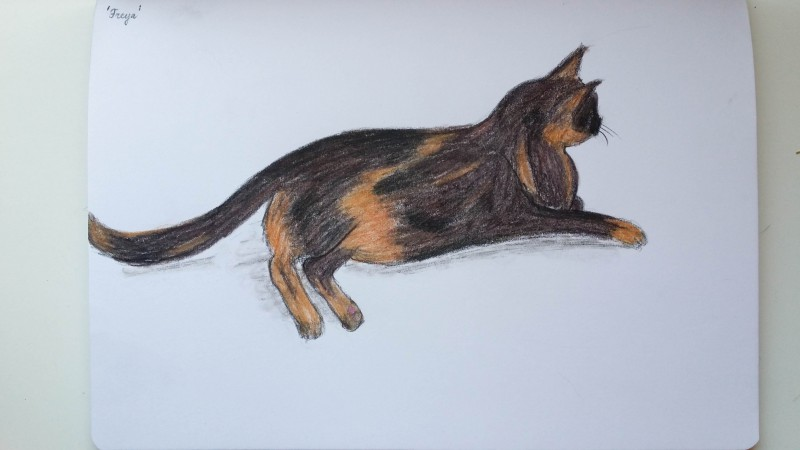 Freya drawing with Inktense - after applying water