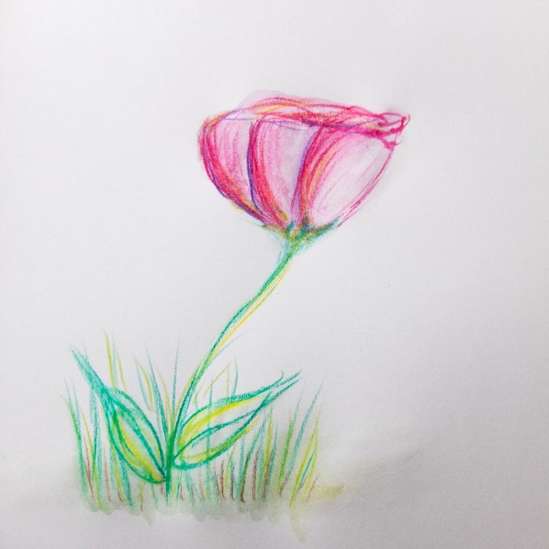 Just a little flower