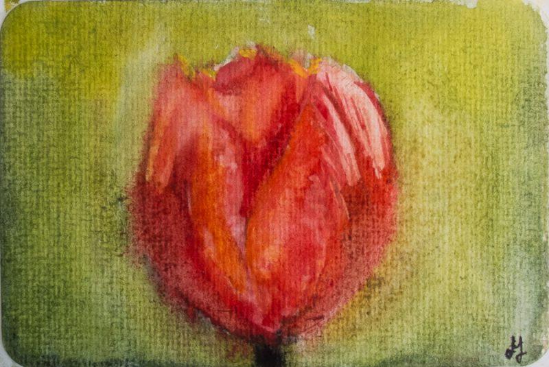 Flaming tulip (10 x 15 cm postcard)