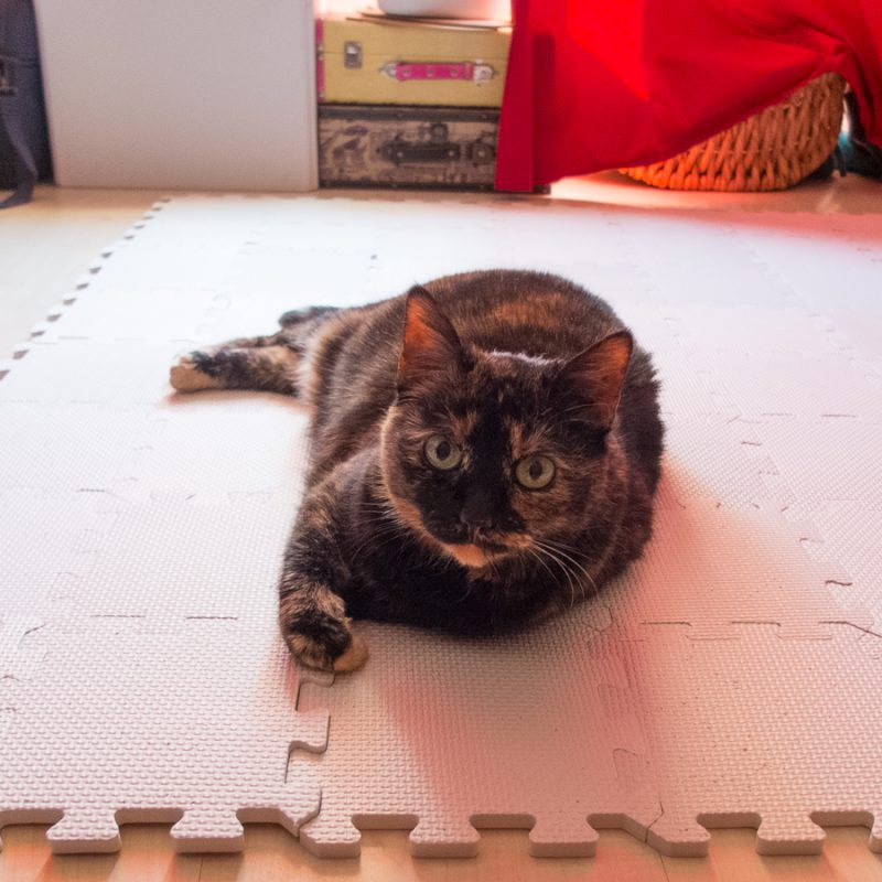 Freya needed to test the blocking mats, of course. She approved them.