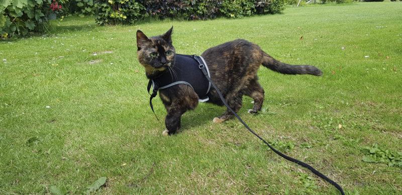 Freya walking on the grass