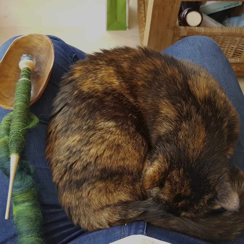 Freya lying on my lap, together with a supported spindle