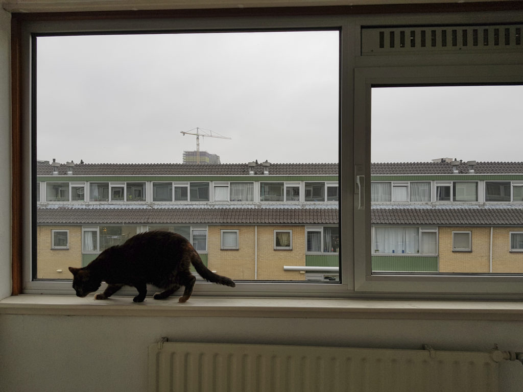Freya is on the window sill of the attic