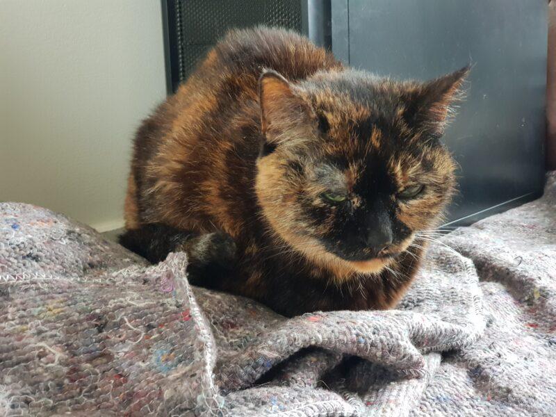 Portrait of Freya sitting on moving blankets