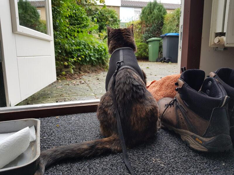 Freya is sitting on the doorstep to the backyard.
