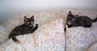 Freya and Fiona Friday 6: Eyes
