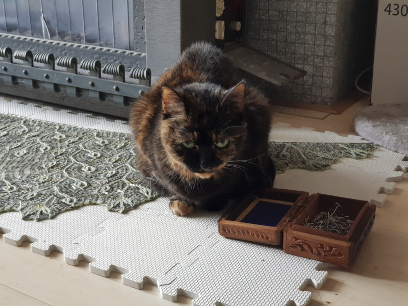 Freya, sitting on top of a blocking shawl, next to a little box of t-pins.