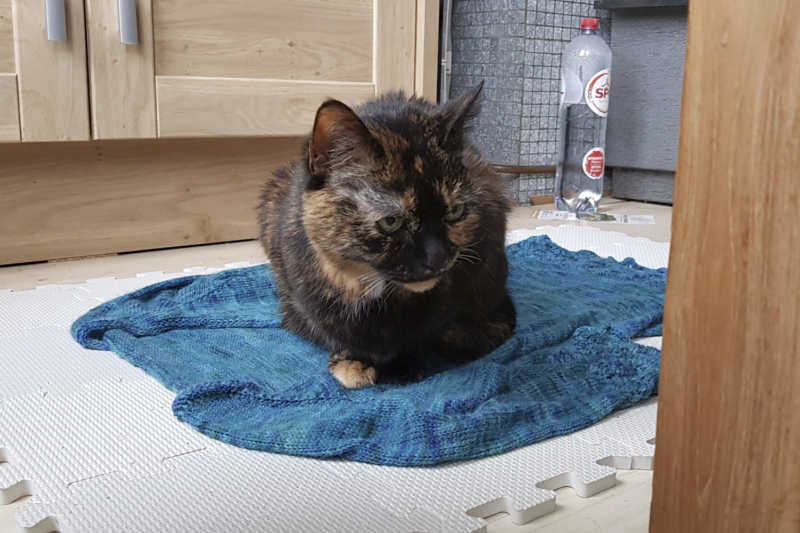 Freya, sitting on a wet knitted sweater.