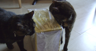 Freya and Fiona Friday 7: Boxes