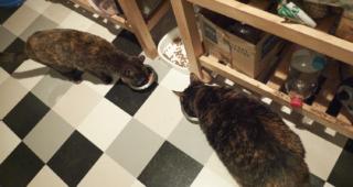 Freya and Fiona Friday 13: Food