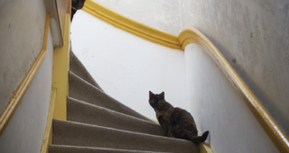 Freya and Fiona Friday 12: At the stairs