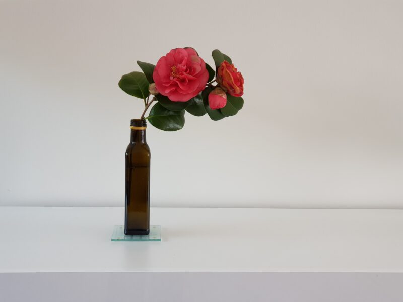 An oil bottle on a white surface, containing one camellia branch with pink flowers