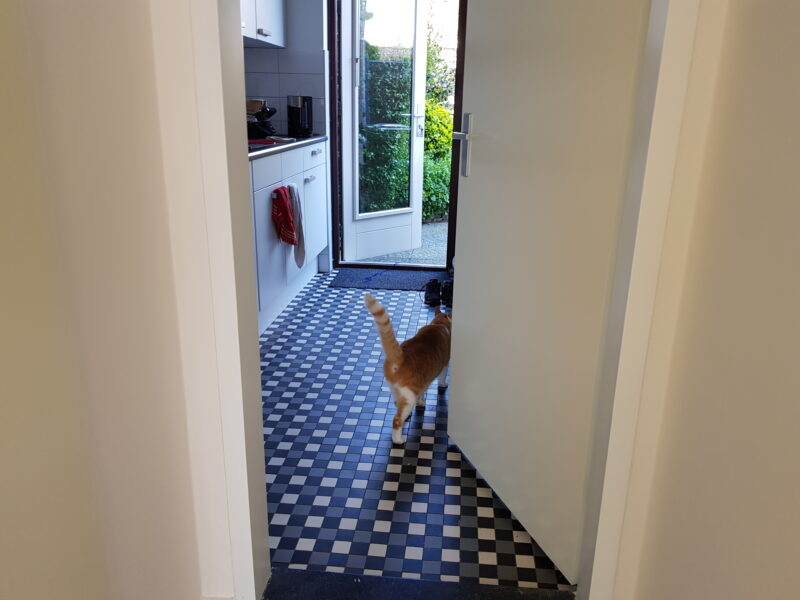 A white and ginger cat walking in our kitchen with his tail up.